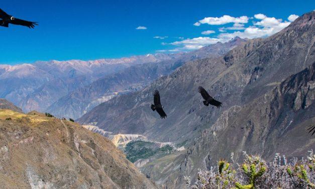 Pérou, séisme de magnitude 7.5