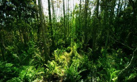 Neo survivalisme et développement durable