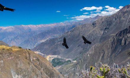 Pérou : séisme de magnitude 7.5