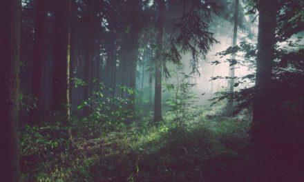 Résilience survivalisme