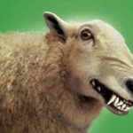 mouton survivaliste