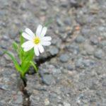 La résilience ,un concept survivaliste